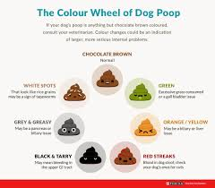 All About Dog Poop Dog Diarrhoea Colour And More Purina