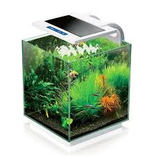 17 best ideas about glass fish tanks large fish 17 best ideas about glass fish tanks large fish tanks water terrarium and water plants