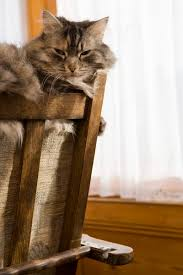 the scene of vinegar can help keep cats off furniture