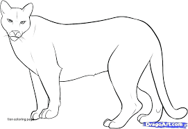mountain lion coloring pages mountain lion coloring pages free mountain lion coloring pages for lion coloring