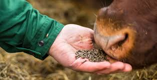 Animal feed | AM Nutrition