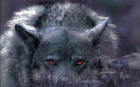 wolves hd wallpapers free wolves snow hd wallpapers