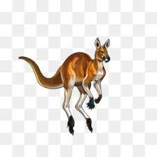 kangaroos cliparts 1000 938 2 2 png