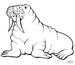 Small Picture Free Printable Walrus Coloring Pages For Kids Color Online 38979