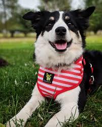 Ecobark Stripe Dog Harness And Leash Combo