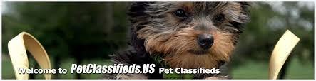 Free Pet Classifieds Buy And Sell Pets For Sale