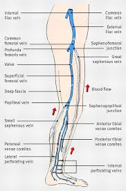 Vein Chart For Shooting Up Diagram Showing The Venous Anatomy Of The Leg