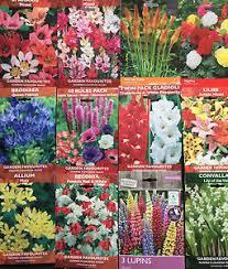 garden bulbs. Image Is Loading GARDEN-BULBS-TUBER-PLANT-SPRING-SUMMER-FLOWERING-FRESH- Garden Bulbs