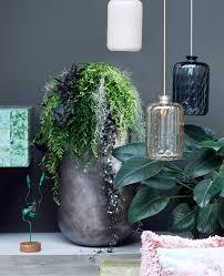 Luftreinigende Pflanzen Fürs Schlafzimmer Schlafzimmer Komplett