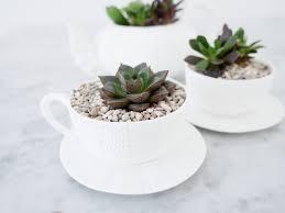 diy teacup planters