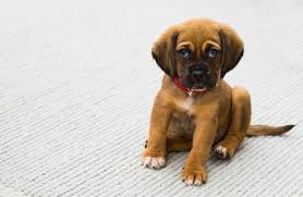 how to remove pet stains odor from