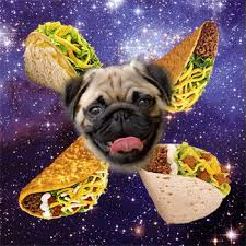 pug in taco costume. Delighful Taco On Pug In Taco Costume T