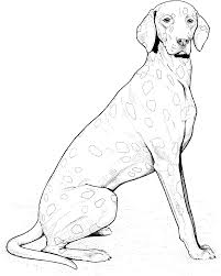 16-coloring-pages-dog