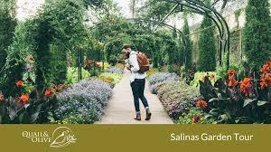 quail olive at salinas garden tour