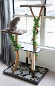 a photo of a cat in a diy cat tree made with real branches