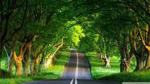 wallpaper hd 1080p nature green. Perfect Nature Beautiful Green Nature Way HD Wallpapers Intended Wallpaper Hd 1080p A
