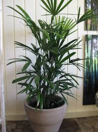 best indoor plants for office. Antique Best Indoor Plants For Office L