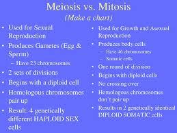 Mitosis Versus Meiosis Chart Meiosis Making Gametes Ppt Download