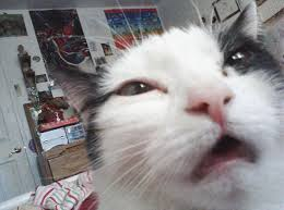 Funny cat pictures Funny Animal Cat Makes Funny Face While Looking Into Camera Certapet Cat Fails 44 Unbelievably Funny Cat Pics Certapet