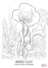 Small Picture Utah State Flower coloring page Free Printable Coloring Pages