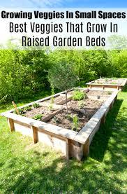 that grow in raised garden beds