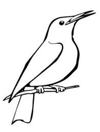 31 Best Bird Coloring Pages Images Bird Coloring Pages Free