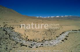 Nature Picture Library Dried river bed showing underlying rocks in barren  landscape, Ladakh, North East India - Gertrud & Helmut Denzau