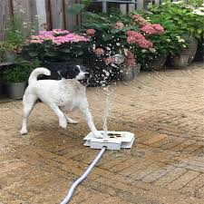 trouble free outdoor dog cat pet drinking doggie water fountain new dog sprinkler ezdeals org one place for all deals and codes