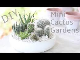 Small Picture DIY Mini Cactus Gardens YouTube