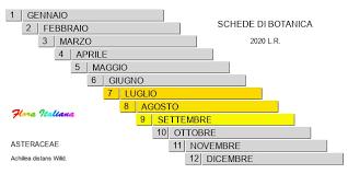 Achillea distans [Millefoglio maggiore] - Flora Italiana
