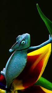 Cool Blue Chameleon Wallpaper iPhone ...