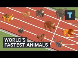 Animal Speed Comparison Chart These Are The Worlds Fastest Animals Youtube