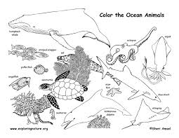 Small Picture Ocean Animals Coloring Page