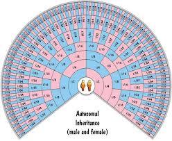 Autosomal Chart Autosomal Dna Inheritance Chart My Familys Twisted Tree