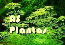 Resultado de imagen de AS PLANTAS
