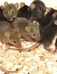 animal testing in asia