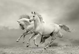 running horses black and white. Fine White Running Horses In Black And White Intended White H