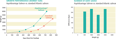 Atlantic Salmon Size Chart Technology Aquabounty Technologies