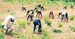 Image result for picture of youths farmers