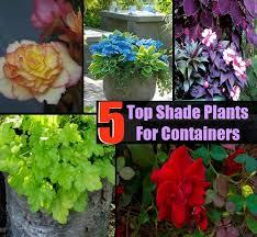 Create A Beautiful Shade Container Garden  Gardening  Tractor Container Garden Shade Plants