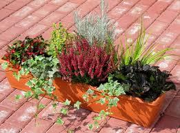 Bepflanzter Balkonkasten 80 Cm Wintergr N Im Bew Sserungskasten Bepflanzter Balkonkasten Cm Sedum Wintergruen