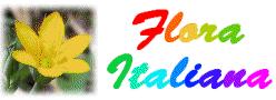 Genere Callianthemum - Flora Italiana