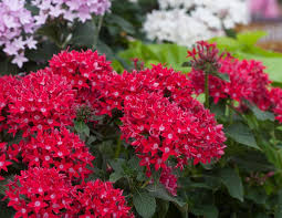 Small Picture 22 Best Flowers for Full Sun Heat Tolerant Flowers for