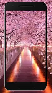 Sakura Wallpaper Hd For Free For Android Apk Download