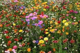 Resultado de imagen de flores silvestres fotos