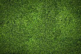 green grass soccer field for background texture premium photo green27 green