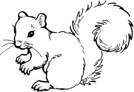Small Picture Squirrel coloring page Free Printable Coloring Pages