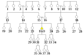 Anthropology Kinship Chart The Bilateral Kindred