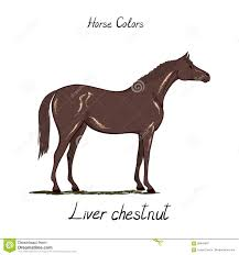 Horse Color Chart On White Equine Coat Colors With Text