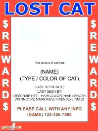 Lost Cat Flyer Found Cat Flyer Sample Pet Found Cat Poster Template Lost